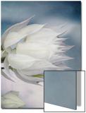 Still Life of a Flower Kunstdrucke von Joyce Tenneson