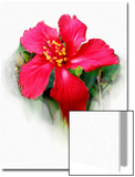 Hibiscus Flower Posters by Rich LaPenna