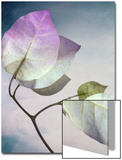 Still Life of Flowers Prints by Joyce Tenneson