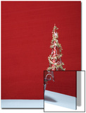 Christmas Tree with Red Background Prints by Laura Johansen