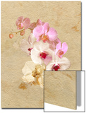Pink and White Flowers on a Textured Surface Prints by Diane Miller