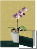 Orchid Plant with Flower in Pot Posters by Rich LaPenna