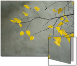 Yellow Autumnal Birch (Betula) Tree Limbs Against Gray Stucco Wall Print by Daniel Root