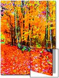 Herbstwald Kunstdruck von Rich LaPenna