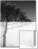 Tree Trunk Shadow on a Wall Prints by Rob Lang
