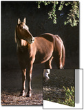 Brown Horse Standing on Trail by Tree Prints by Diane Miller