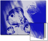 Four-Eye Butterflyfish Swim in the Blue Sea Posters av Rich LaPenna