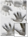 Children&#39;s Handprints in a Spring Snow Prints by John Nordell