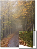 Rural Road in Autumn at Dawn, Vermont Prints by John Churchman