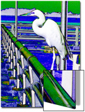 Egret Perched, Florida Posters by Rich LaPenna