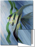 Angelfish Swims Near Grass Prints by Rich LaPenna