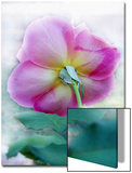 Winter Greenhouse Rose, Underside Posters by Emiko Aumann