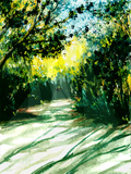 Shadows of Trees Line the Sandy Trail Prints by Rich LaPenna