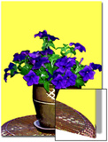 Petunia Against Yellow Background Prints by Rich LaPenna
