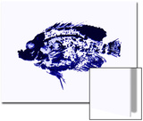 Blue Dapple Fish Print Posters by Rich LaPenna