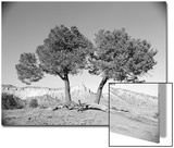 Black and White Image of Two Trees Prints by Rob Lang