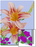 Rlowers, Two Daylilies in a Bed of Carnations Posters by Rich LaPenna