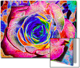 Rainbow-Colored Rose Posters by Rich LaPenna
