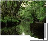 Image of a Swamp Print by Paul Hernandez