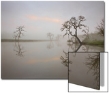 Misty Lake Scene with Trees Prints by Diane Miller