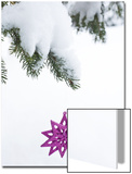 Pink Star Christmas Ornament Hanging Off Pine Branch in Forest, Saratoga Springs New York Posters by Laura Johansen