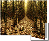 Forest of Trees with Infinite Pathway Prints by Paul Hernandez