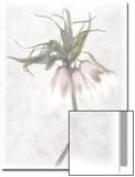 Still Life of Flowers Kunstdrucke von Joyce Tenneson