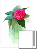 Red Camellia Flower Posters by Rich LaPenna