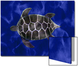 Seaturtle in Deep Blue Water Prints by Rich LaPenna