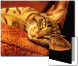 Lazy Cat on the Sofa Prints by Winfred Evers