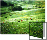 Lush Hillside with Horses in the Middle Ground, Colorado Rockies, Colorado, USA Posters by Margaret L. Jackson