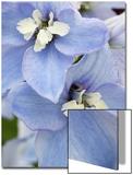 Delpinium Flowers Posters af James Guilliam