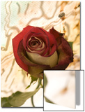 Red Rose with Abstract Drawing Background Print by Daniel Root