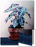 Plant in Pot on Blue Floor Prints by Rich LaPenna