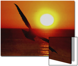 Bird Gliding into Setting Sun Art by Rich LaPenna