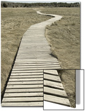 Boardwalk across a Tidal Marsh Leading to a Wooden Area at a Wildlife Sanctuary Posters by John Nordell
