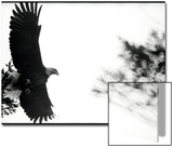 Bald Eagle in Flight by Treetop Prints by Deon Reynolds