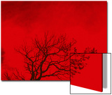 Tree Silhouette Against a Red Sky Posters by Rob Lang