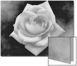 Gray Rose on Gray Background Posters by Rich LaPenna