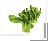 Shanghai Bok Choy on White Background Print by Tina Chang