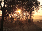 Rising Sun Coming Through Trees with Early Morning Mist, Riebeek East, Eastern Cape, South Africa Print by Neil Overy