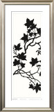 Maple Silhouette II Posters by Judy Shelby