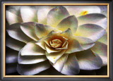 Flower in Full Bloom Framed Giclee Print by Stephen Lebovits