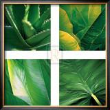 Flora Tropical Prints by Tony Koukos