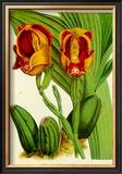 Orquideas II Prints by J. Nugent