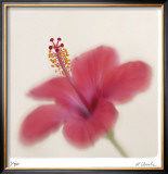 Botanical Study 2 Limited Edition Framed Print by Claude Peschel Dutombe