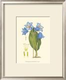 Periwinkle Blooms II Posters by Samuel Curtis
