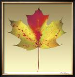 Maple Leaf Limited Edition Framed Print by Robert Mertens