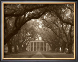 Oak Alley Prints by Cindy Mcintyre