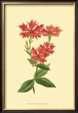 Le Fleur Rouge III Prints by Sydenham Teast Edwards